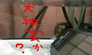 Pookie_inugamike_2