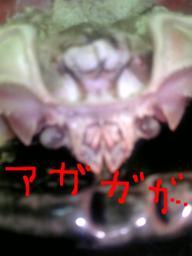 Ejima_matuba_maturo2
